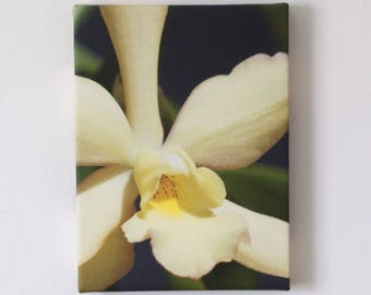 Original Art Canvas - Sweet Yellow Orchid