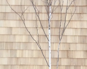 Shop Front Window Display Branches for Valentine's Day Decor or other - 5' foot Birch Branch