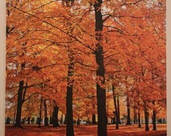Prospect Park - Holland MI