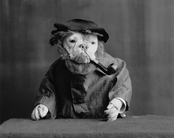 Old Dog Photo, Portrait, 1905, Bull Dog, Black and White Photo, Wall Art, Industrial, Man Cave, Anthropomorphic Photography, Art for Lofts