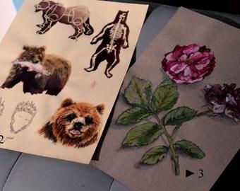 Various 'nature' drawings
