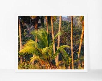 Tropical Printable, Palm Tree Print, Botanical Print, Printable Photography, Printable Art, Instant Download, Printable Poster, Digital Art