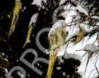 Beards in the Wind - 8x10 Print
