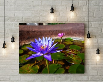 Lotus Flowers in Paradise in Grenada, West Indies Large Fine Art Print or Canvas Photography Wall Art