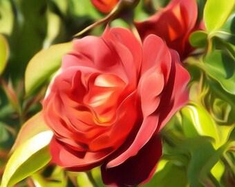 Digitally Enhanced 8x10 Photo Print - Red Roses
