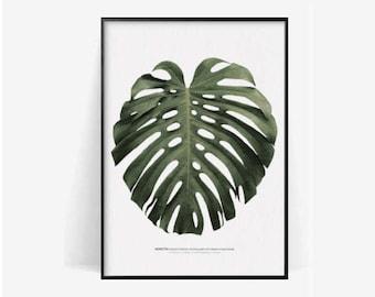 monstera botanical poster print/monstera print/plant print/herb monstera poster print/botanical print monstera photography print/monstera