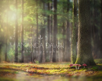 Digital backdrop, digital background, forest, enchanted, magical, photography backdrop, fairy backdrop
