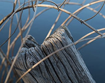 Weathered Wood - Photographic Print