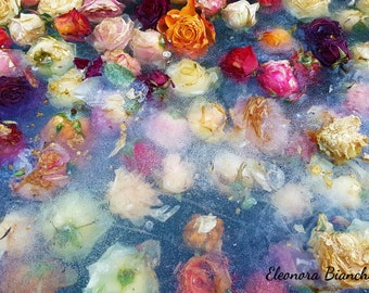 Photographic print rose (home decoration) in different sizes