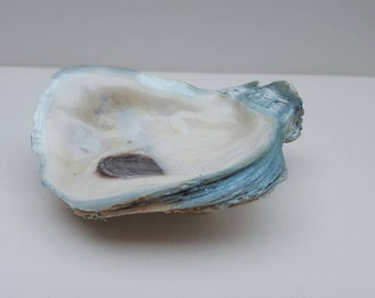 Ice Blue Painted Rim Oyster Jewelry or Trinket Dish item IP01