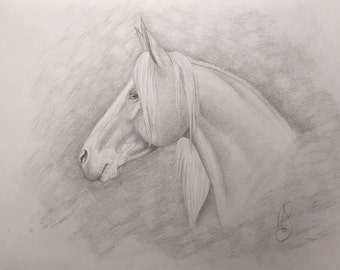 Side View Palomino Horse Portrait in Graphite