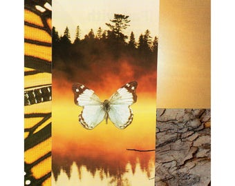 butterfly print #6: instant download