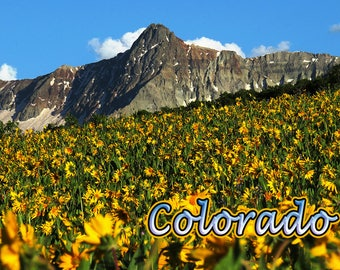 Golden Wildflowers and Rugged Mountain magnet