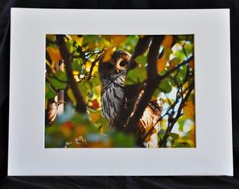 Owl print - Barred owl. Owl Photography, Owl art.