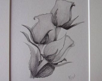 Roses Pencil Drawing, Flower Drawing, Pencil Sketch, 10x8 Drawing, Flower Pictures, Rose Bud Pictures