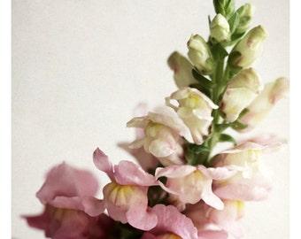 Home Decor - Gift For Mom - Flower Photograph - Nature Photography - Pink Print -Snapdragon #1 - Fine Art Photograp - Botanical Art - Floral