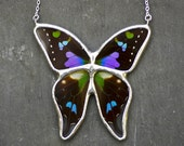 Real Butterfly Necklace. Real Butterfly Jewelry. Graphium Weiskei Butterfly Necklace.