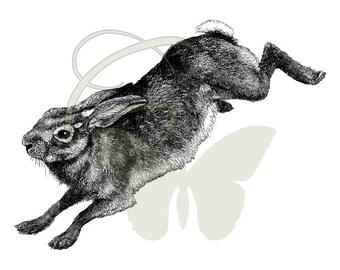 Printable Rabbit Clip Art Digital Download Hare Antique Illustration Image Transfer