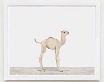 Baby Animal Nursery Art Print. Baby Camel. Safari Animal Wall Art. Animal Nursery Decor. Baby Animal Photo.