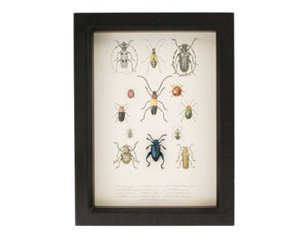 Framed Beetle with Victorian Book Print Display