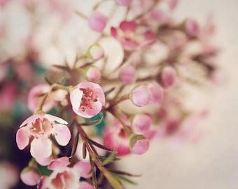 April, pink flowers, Spring, green mason jar, floral, Fine Art Photograph, 8x10