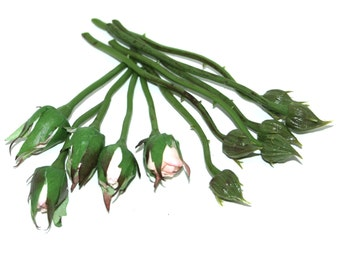 12 Small Rose Buds - Barely Blooming - Artificial Flowers, Silk Roses