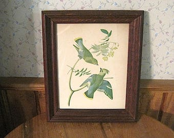 Antique Framed Bohemian Waxwing Print