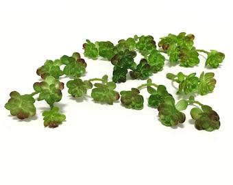 24 Tiny RUST GREEN Sedum Blossoms on Short Stems- Artificial Flowers, Flower Crown, Terrarium, Fairy Garden, Millinery, Hair Accessory, Hat