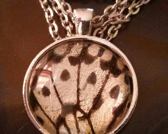 Butterfly wing necklace *genuine *taxidermy *curio *entomology