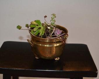 Potted Succulent Garden, Succulents, Home Decor, Living decor, 50's Brass vessel, Plants