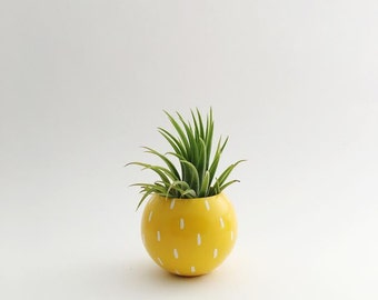Sphere Succulent Air Plant Planter // Pineapple