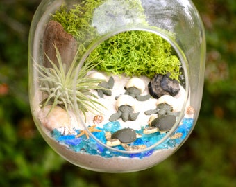 Sea Turtle Terrarium Kit ~ Glass Hanging or Sitting Terrarium with Air Plant ~ 4 Hatching Sea Turtles ~ 2 Sea Turtles ~ Beach Decor ~ Gift