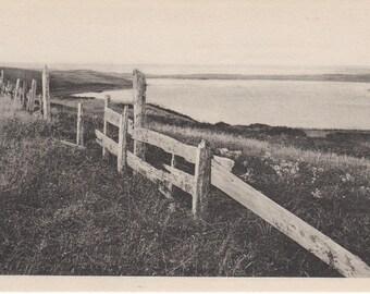 Vintage Nantucket post card, Cupaum Pond. Gardiner black & white.