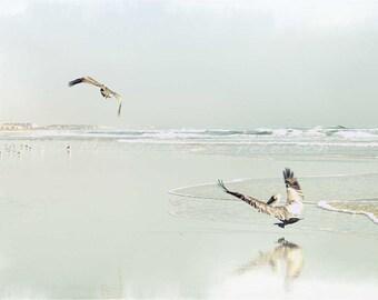 Coastal Pelicans, Beach Photography, Fine Art Print, Birds, Waves, Sand, Nature, Sandy Beaches, Ocean Wall Art, Florida Home Decor