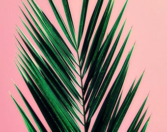 palm tree art print // photography // mid century california pastel art print - Pink Palm, original photograph art print