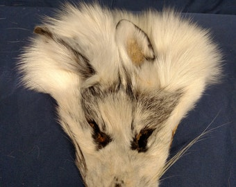 1 real animal fur Tanned  blue marble fox face head taxidermy skin pelt hide part
