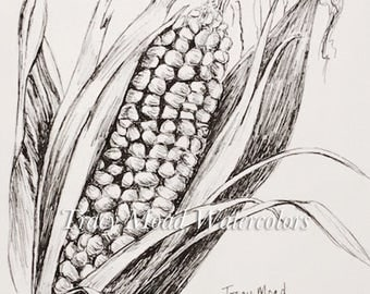 vegetable drawings corn illustrations botanical pen and ink black and white