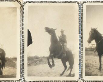 Riding High collection Horse Rider found art photo vernacular photography social realism original old photograph ephemera
