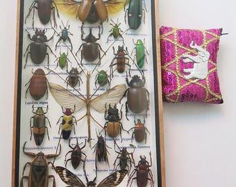 3D Real Rare Big Set Stick Insect Bug Bugs Box Display Taxidermy Xylotrures Gideon Eupatorous 5 Horn Framed Cicada Jewel Beetle Entomology