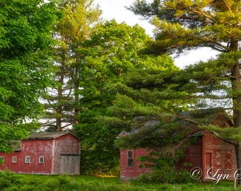 The Vermont Red Barns -  Nature photography, landscape photography, summer, fine art print, wall art, leaves, Vermont, farm, new england