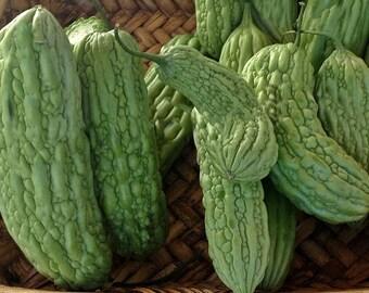 Bitter Melon Green Skin Non GMO Open Pollinated Naturally Grown