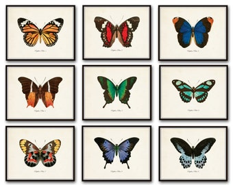 Papillon Butterfly Print Set No.12, Vintage Butterfly Art Print, Print Set, Giclee, Scientific Illustration,Wall Art, Home Decor, Insect Art