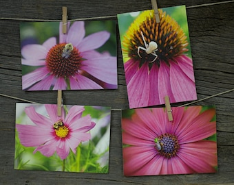 Card Set, Photo greeting card, Photographic greeting card, Hostess gift, photo greeting card, blank photo greeting card- Pink Flowers