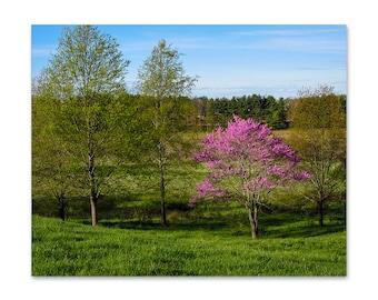 Tree Wall Art - Bedroom Decor - Landscape Print - Nature Print - Spring Decor - Nature Photography Print - Spring Photography - Redbud