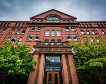 The Harvard Museum of Natural History, in Cambridge, Massachusetts. | Photo Print, Stretched Canvas, or Metal Print.