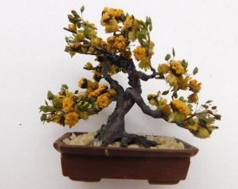 KIT:  Yellow Sage Bonsai