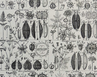 """Antique print.1861 Botany and Pharmacology print.Vegetables,parsley,Celery,carum,pimpinella,silaum,etc.. 156 years old.10,5x8,6"""",27x22 cm"""