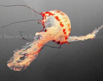 Jellyfish Art, Nature Photography, Wildlife Art, Ocean Photography, Beach Art, Pink Jellyfish, Jellyfish Home Decor, Jellyfish Photography