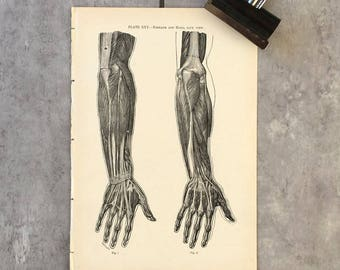 Original Antique  Vintage Anatomy Print Victorian Anatomical Print Human Anatomy Small Poster Chart Anatomy Art Decor - Medical Student Gift