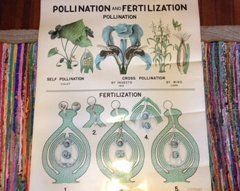 ON SALE Vintage 1960's Sargent-Welch Scientific Pollination and Fertilization Chart Diagram Poster LARGE 4 Feet x 3 Feet Classroom